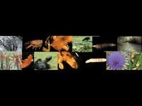 05-organismi.jpg