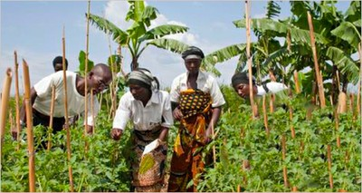 Agriculture: FAO-ENEA webinar on promoting sustainable agri-food systems