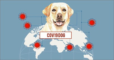 COVID-19: Sensors, artificial intelligence and molecular dogs  deployed to detect the virus