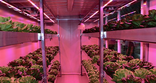 Environment: Abandoned buildings turned into vertical greenhouses thanks to a project with ENEA