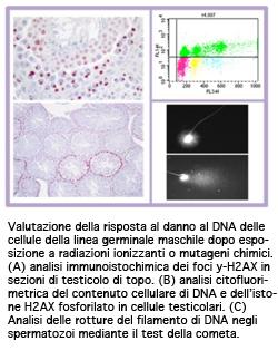 DNACellule