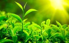 bioenergia.jpg