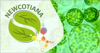 Coronavirus: dal tabacco selvatico nuove prospettive di cura del COVID-19