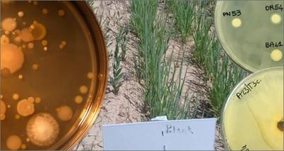 Giornata Mondiale della Terra: da ENEA microbi 'benefici' al servizio di agricoltura e ambiente