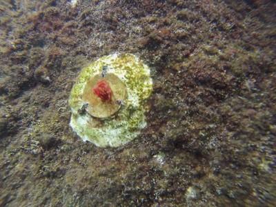 Mimic a un mese dalla posa in mare