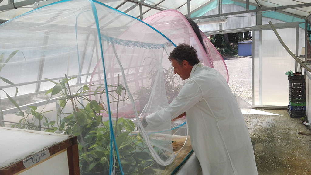 studio ENEA  sulla zanzara tigre