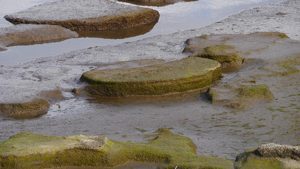 Dettaglio di una mola non estratta presso la cava di Capo d'Orlando (Messina) in condizioni di persistente alta pressione e bassa marea di circa 40 centimetri