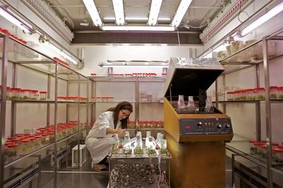 """La """"culla"""" delle cellule vegetali. Nella camera climatica sotto una luce """"su misura"""" nascono e si sviluppano le cellule  vegetali"""