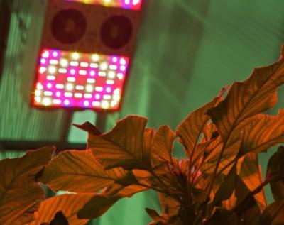 Esempi di piante 'fuori suolo, con luce LED
