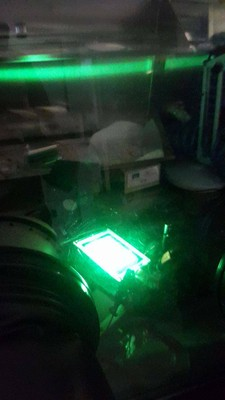 Mattonella OLED verde in glove box