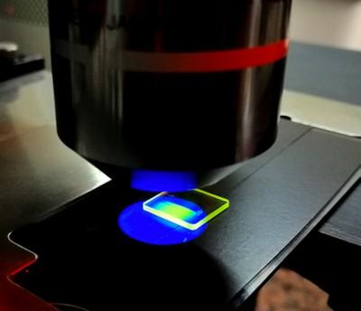 Cristalli di fluoruro di litio luminescenti dopo irraggiamento con protoni dell'acceleratore TOP-IMPLART osservati al microscopio ottico