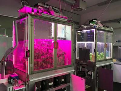 Simulatore smart per coltivare piante al chiuso anche nello spazio