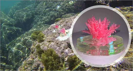 ENEA Alghe Marine Artificiali