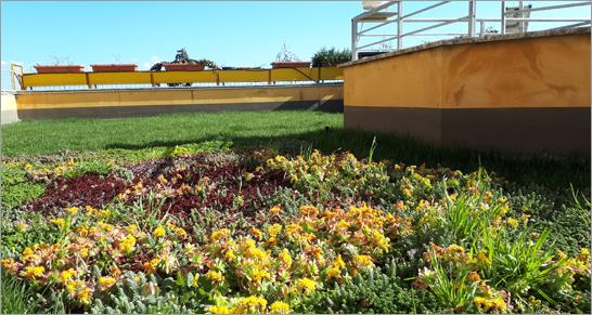 Tetti verdi nel Centro ENEA della Casaccia