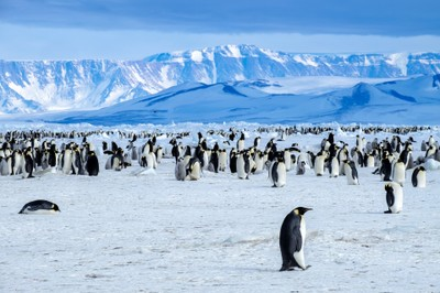 Antartide - Pinguini