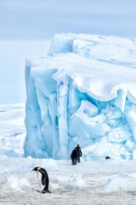 Antartide - Pinguini. Foto: B. Pagnanelli