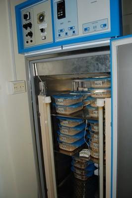 Biosaggi_in_incubatore.jpg