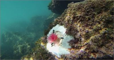 """Ambiente: alghe """"sosia"""" 3D per studiare i fondali marini colpiti dal cambiamento climatico"""