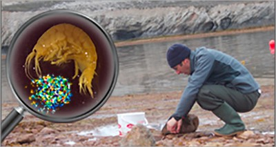 Ambiente: allarme microplastiche nel Mar Artico, contaminati i crostacei