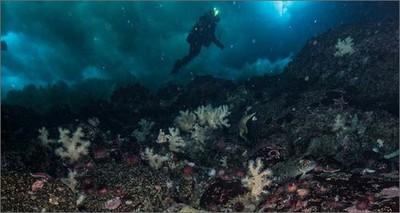 Ambiente: Antartide, un laboratorio sotto i ghiacci marini per studiare i cambiamenti climatici
