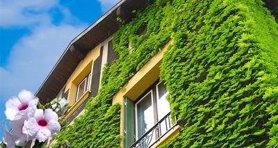 """Ambiente: un """"cappotto verde"""" per case più fresche in estate e bollette meno care"""