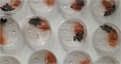 Biotecnologie: ENEA studia il possibile impiego di nuovi bioinsetticidi in agricoltura biologica