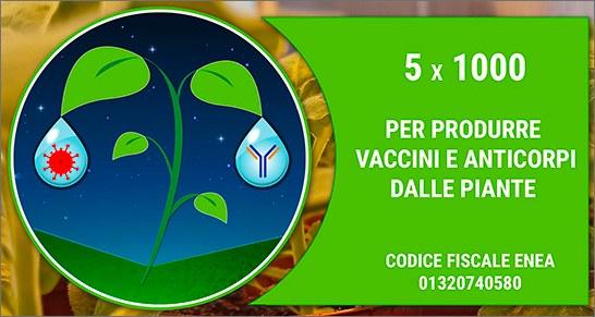 Covid: il 5 X 1000 ENEA per produrre vaccini e anticorpi da piante 'biofabbrica'