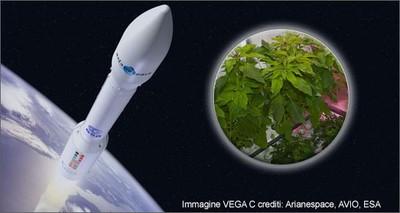 Innovazione: è made in Italy il primo micro-orto in orbita per coltivare verdure nello spazio