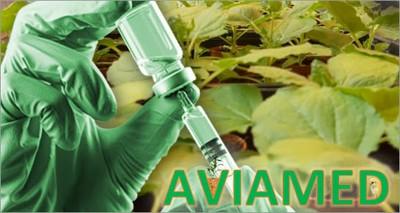 Salute: con il 'molecular farming' vaccini veterinari di ultima generazione dalle piante