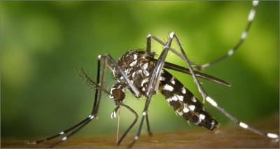 Salute: da ENEA nuovo metodo biotecnologico contro la zanzara tigre