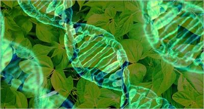 Salute: ENEA con Istituto Regina Elena per vaccini genetici contro tumori e malattie infettive