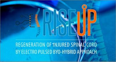 Salute: nuovo metodo per rigenerare le lesioni del midollo spinale