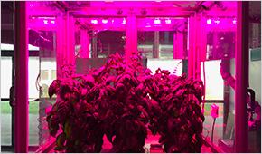 Coltivazione piante