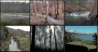 05-vari-ecosistemi.jpg