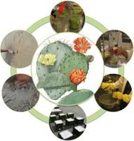 Dalla tradizione empirica all'innovazione tecnologica: rivisitazione di antiche usanze messicane per lo sviluppo di prodotti sostenibili per la Conservazione  e il Restauro