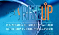 RISEUP Regeneration of Injured Spinal cord by Electro pUlsed bio-hybrid aPproach   International meeting