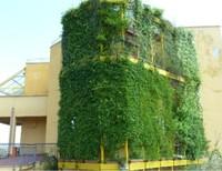 Scuola delle Energie: Le coltri vegetali per la sostenibilità energetica e ambientale degli edifici